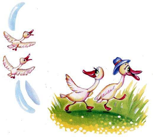 Стая и стадо гусей