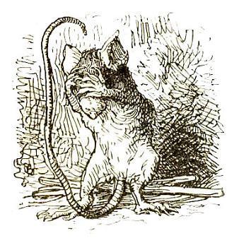 мышь закрыла в ужасе глаза