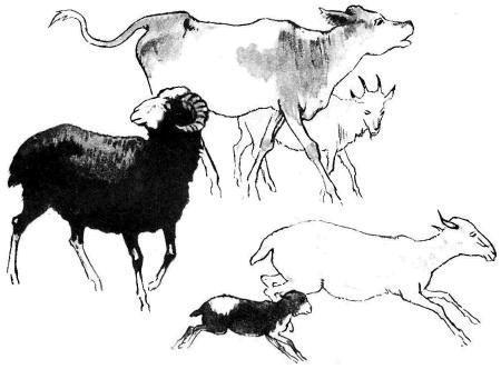 стадо коровы бараны