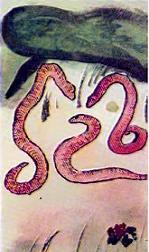 Тысяченожка и червяк