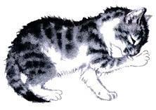 котенок умывается