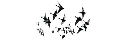 Утки в небе
