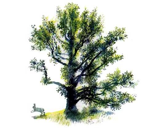 заяц у дерева