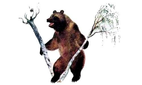 медведь ломает деревья