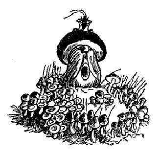 главный гриб