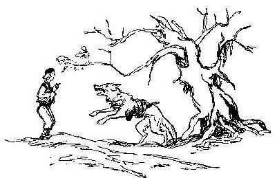 Волк с железной головой