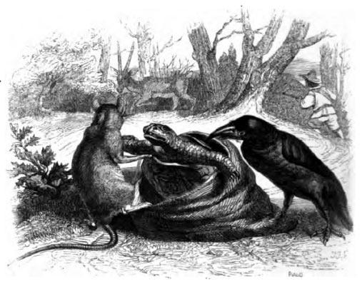 Ворон, газель, черепаха и крыса