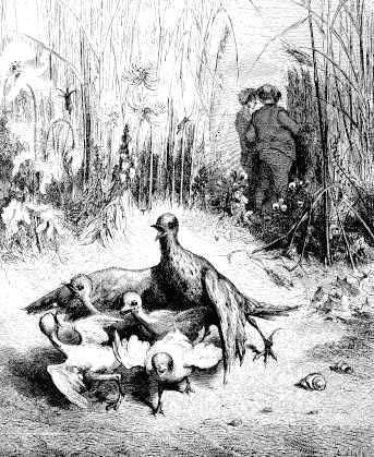 Жаворонок с птенцами и землевладелец