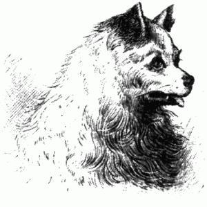 пёс Султан