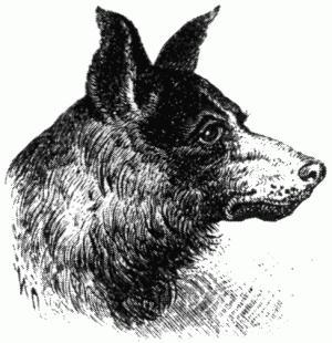 пёс Атлан